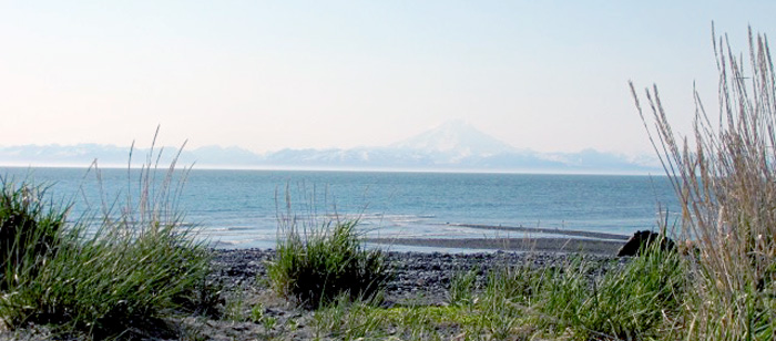 clamming in the Kenai Peninsula's Deep Creek area