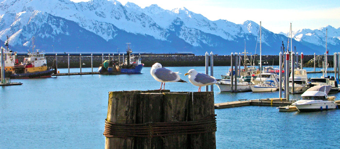 the harbor at Seward, Alaska