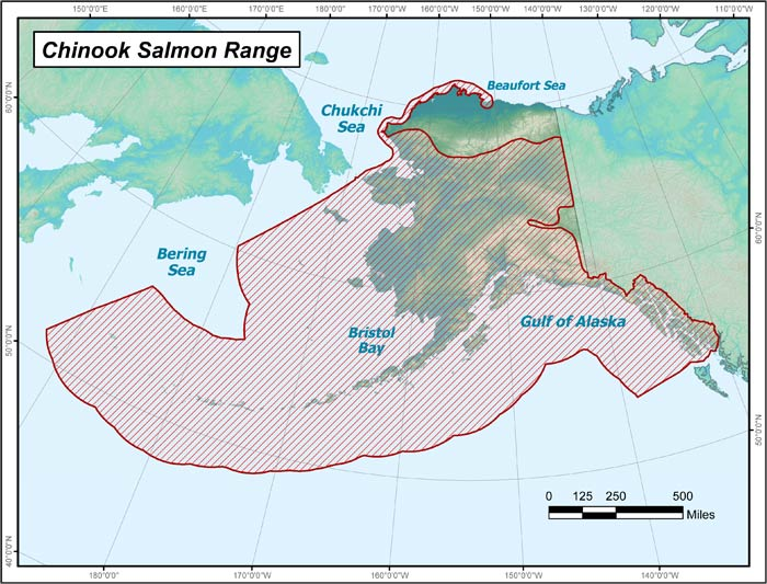 King salmon distribution in Alaska (ADF&G map)