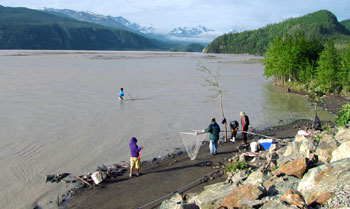 Copper River Dipnetting Information Alaska Dipnetting Alaska