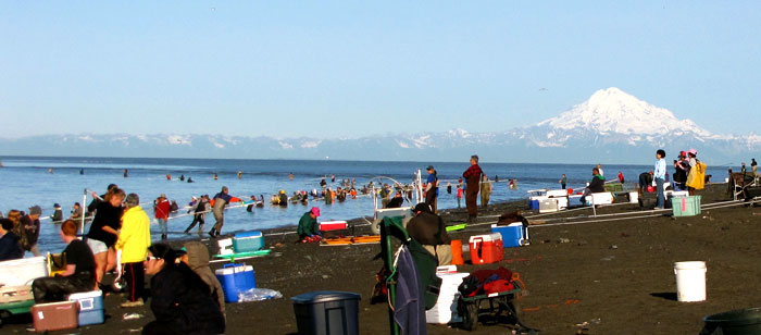 Dipnetting at the mouth of the Kenai River, Alaska