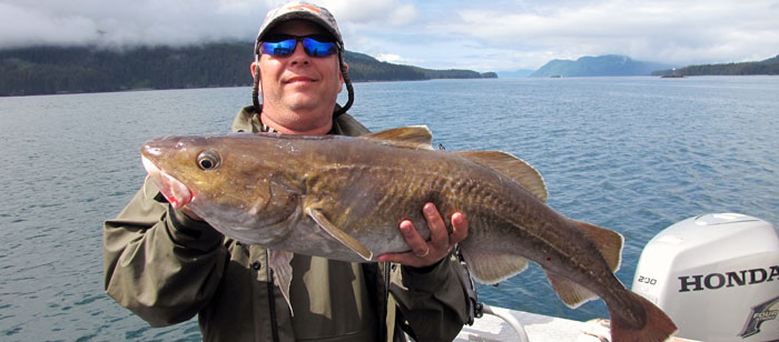 Pacific cod taken off Kodiak Island, Alaska