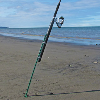 sand spike on the beaches of Cook Inlet near Ninilchik, Alaska