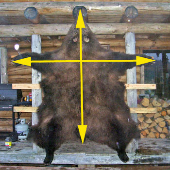 Alaska brown bear hide