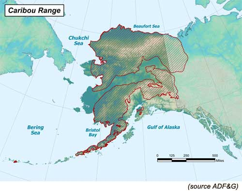 Caribou hunting in alaska alaska outdoors supersite regions methods caribourange sciox Choice Image