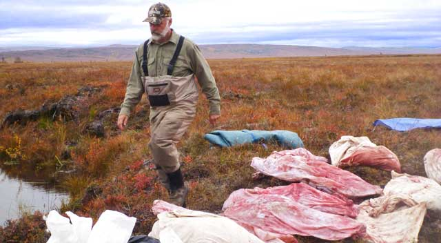 Meat care on open tundra