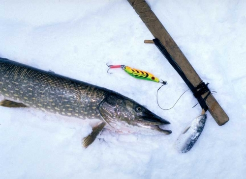 Best ice fishing rig for pike best fish 2017 for Pike ice fishing lures